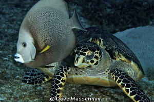 Taken in Cozumel Mexico..the fish and sea turtle just hap... by Dave Wasserman 